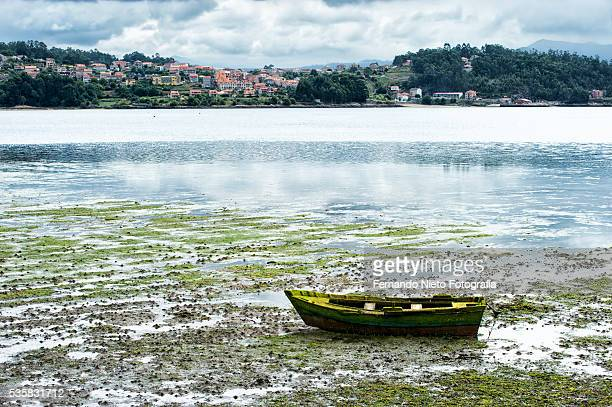 Row boat covered with moss and beached at low tide.