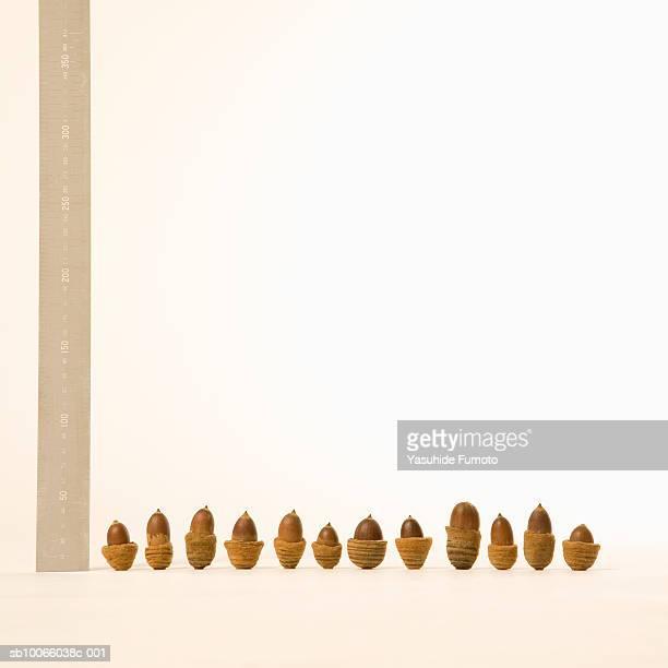 Row of acorns