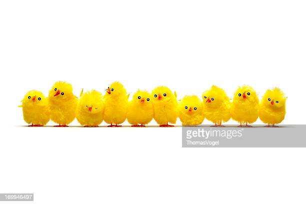 Row of Baby Chicken - Chick Humor Fun Easter