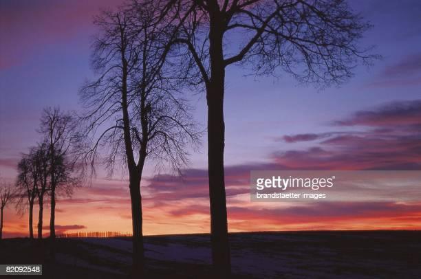 Row of bare trees in silhouette in front of orangeblue sky at sunset Waldviertel Austria Photograph Around 2004 [Silhouette einer Reihe von kahlen...