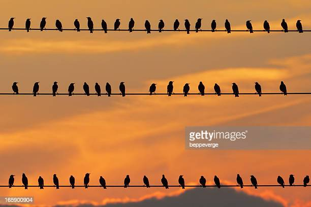 row of birds