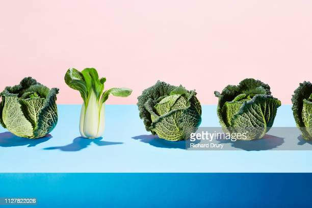 a row of cabbages with one bok choy - 白梗菜 ストックフォトと画像