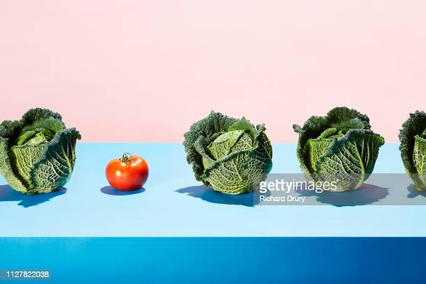 a row of cabbages with one red tomato - richard drury stock pictures, royalty-free photos & images