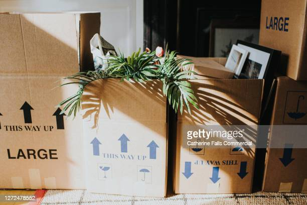 a row of cardboard boxes in a domestic room during a house move - absence stock pictures, royalty-free photos & images