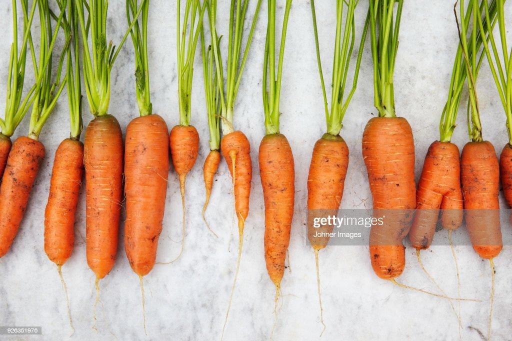 Row of carrots : Stock Photo