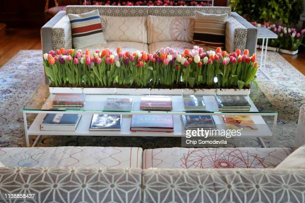 Row of colorful tulips decorate a table in library at the Dutch Ambassador's residence during the Tulip Days celebration March 28, 2019 in...