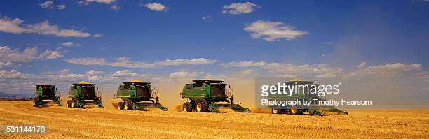 row of combines harvesting barley - timothy hearsum stock pictures, royalty-free photos & images