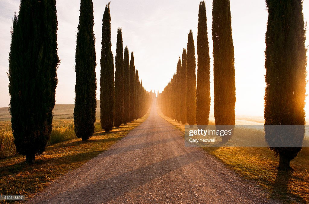Row of Cypress trees and farmhouse at sunrise : Stock Photo
