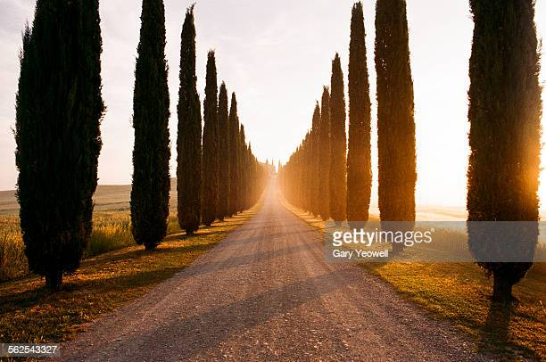 row of cypress trees and farmhouse at sunrise - cypress tree stock pictures, royalty-free photos & images