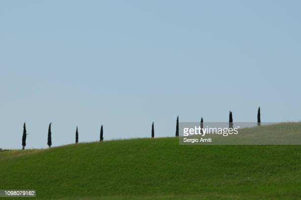 row of cypress trees in tuscany - italian cypress stock pictures, royalty-free photos & images