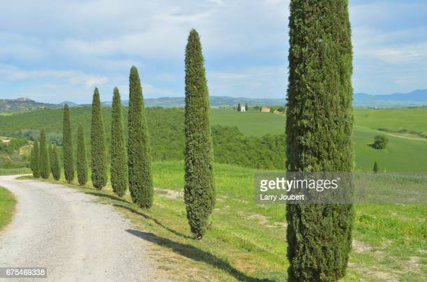 row of cypress trees with a small bell tower in between - san quirico d'orcia stock pictures, royalty-free photos & images