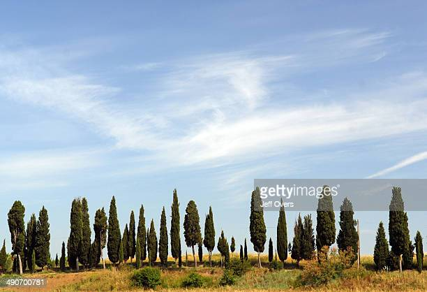 Row of cypresses in Tuscany, Italy, . Grass grasses cypress tree hill hills Italian landscape landscapes field fields Tuscan rural country sky cloud...