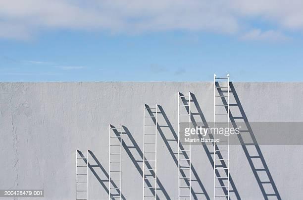 row of different sized ladders leaning against concrete wall - la scala del successo foto e immagini stock