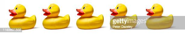 row of ducks together following the leader - things that go together stock pictures, royalty-free photos & images