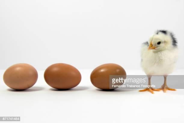 row of eggs and chick - beat your meat stock photos and pictures