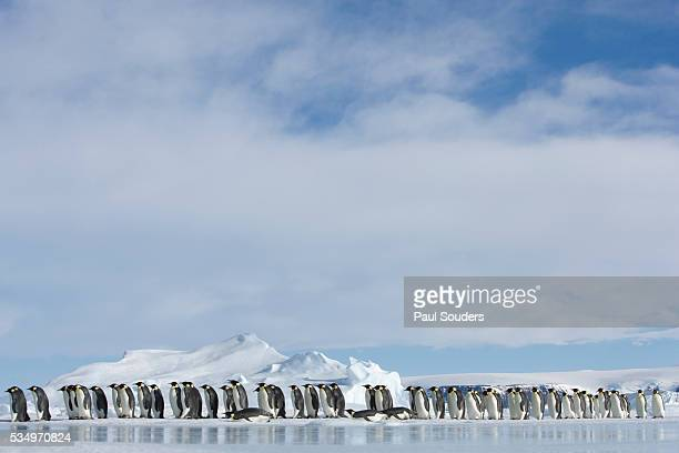 row of emperor penguins in antarctica - rookery stock pictures, royalty-free photos & images