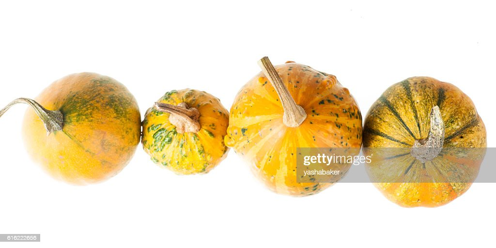 Row of four various organic gourds of decorative pumpkins : Stock-Foto