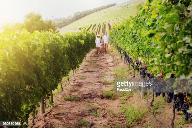 row of grapevines with a distant couple walking along them - constantia stock pictures, royalty-free photos & images