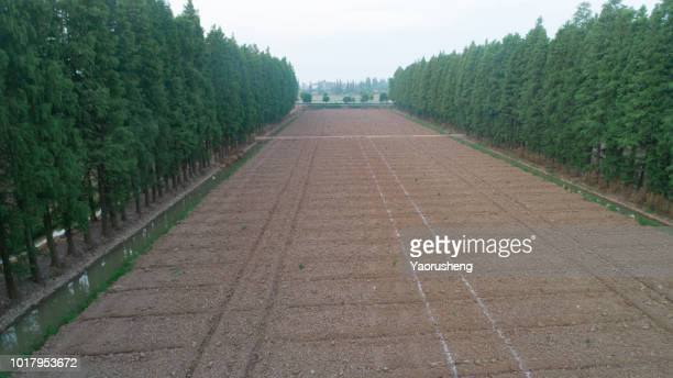 row of green tree growing in soil,view by drone