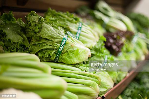 row of green vegetables in health food shop - lettuce stock pictures, royalty-free photos & images
