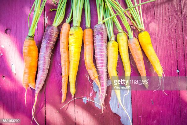 Row of heirloom carrots on pink wood