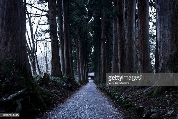 row of japanese cedars - shrine stock pictures, royalty-free photos & images