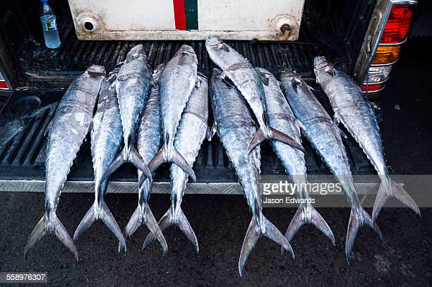 A row of King Fish for sale in a fish market.
