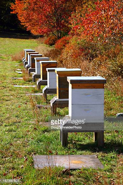 row of man made honey bee boxes - beehive stock pictures, royalty-free photos & images