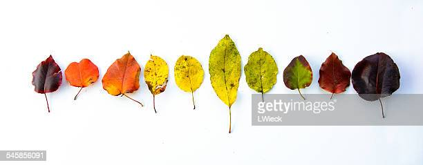 Row of multi-coloured autumn leaves
