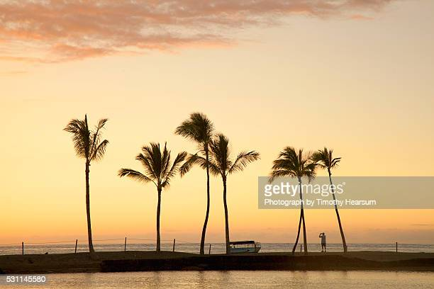 row of palm trees along breakwater at sunset - timothy hearsum stock pictures, royalty-free photos & images