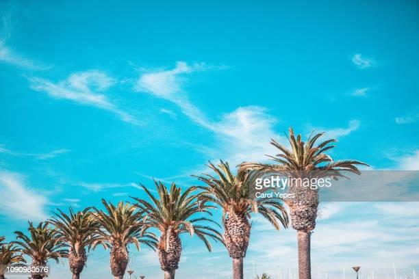 row of palms against blue sky - beverly hills california stock pictures, royalty-free photos & images