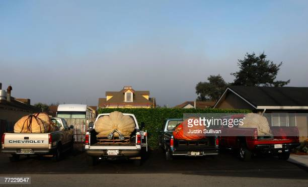 A row of pickup trucks hold giant pumpkins at the 34th Annual Safeway World Championship Pumpkin WeighOff October 8 2007 in Half Moon Bay California...