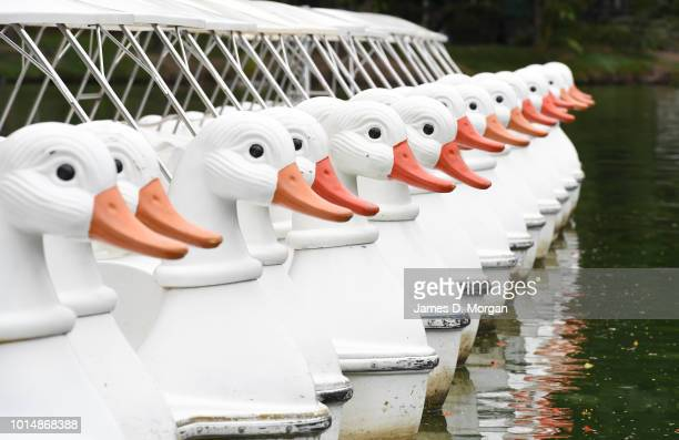 A row of plastic hire boats shaped as swans sit on a lake during the morning heat on August 11 2018 in Bangkok Thailand Lumphini Park is one of the...