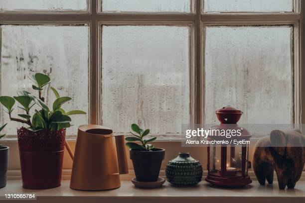 row of potted plants, decorative items and watering can on a windowsill at home, shallow focus. - succulent stock pictures, royalty-free photos & images