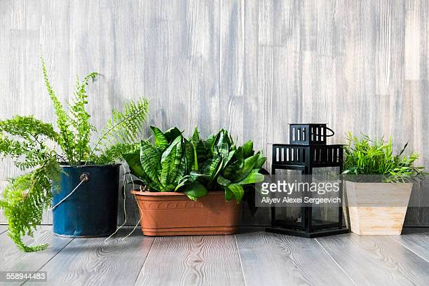 Row of potted plants on grey wooden floor