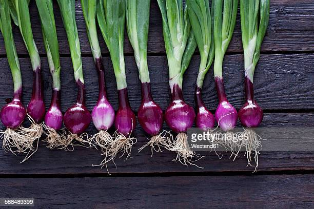 Row of red spring onions on dark wood