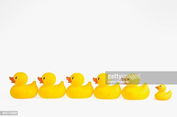 Row of rubber ducks.