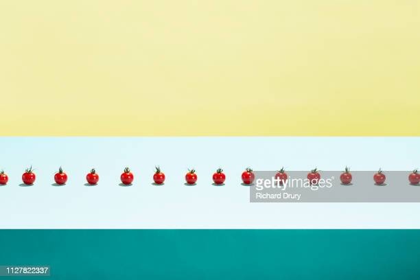 A row of small cherry tomatoes