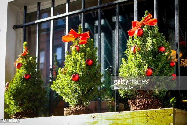 row of small christmas trees in pots on window ledge - brian sills stock pictures, royalty-free photos & images