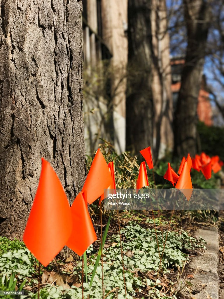 Row Of Small Orange Flags In Garden To Mark Border Of Seedlings Or ...