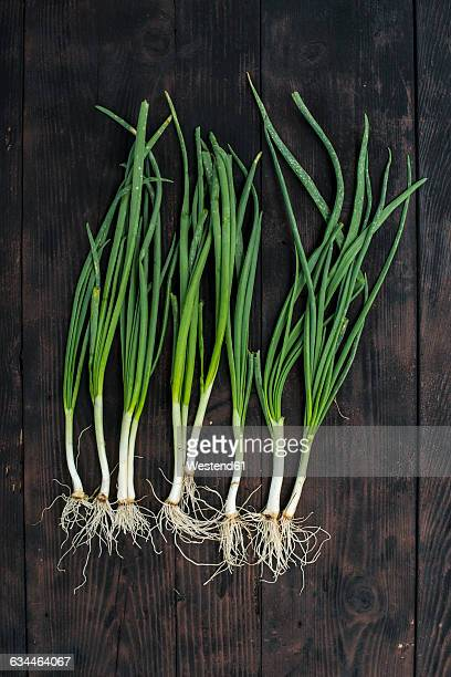Row of spring onions on dark wood