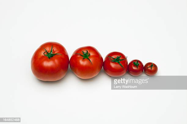 A row of tomatoes lined up from largest to smallest