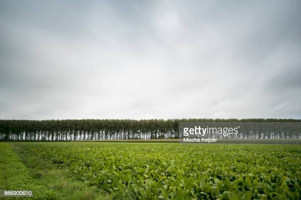 row of trees along leopold canal, damme, west flanders, belgium - フランダース ストックフォトと画像