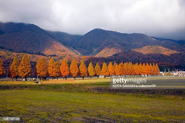 Row of Trees and Mountains in Autumn