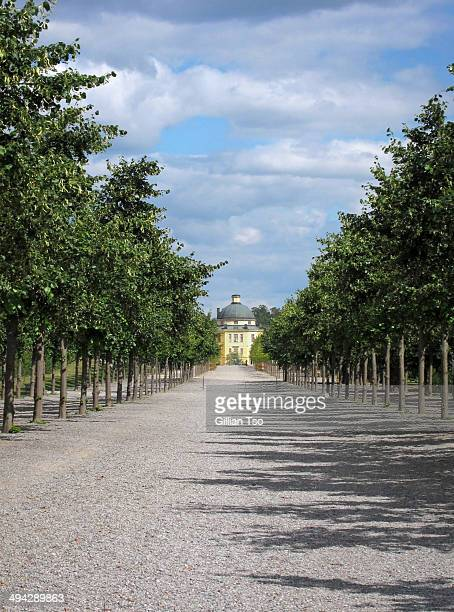 CONTENT] Row of trees in the grounds of Drottningholm Palace near Stockholm Sweden The palace is the primary residence of the Swedish Royal Family