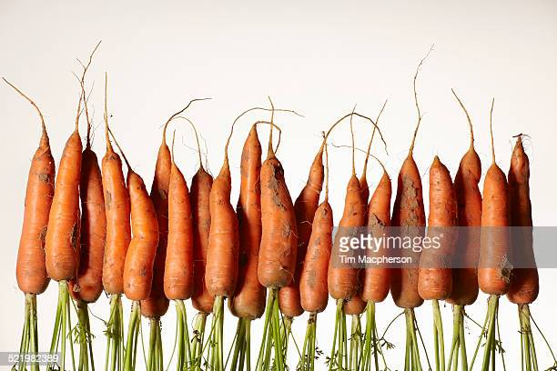 A row of upside down fresh carrots with roots