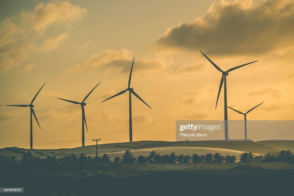 A row of wind turbine at sunset, Paracuru, Brazil : Stock Photo