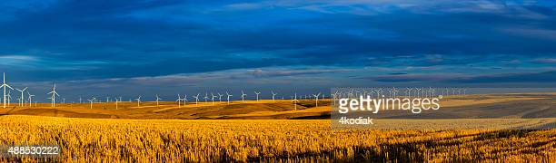 Row of Wind Turbines at dusk Panorama