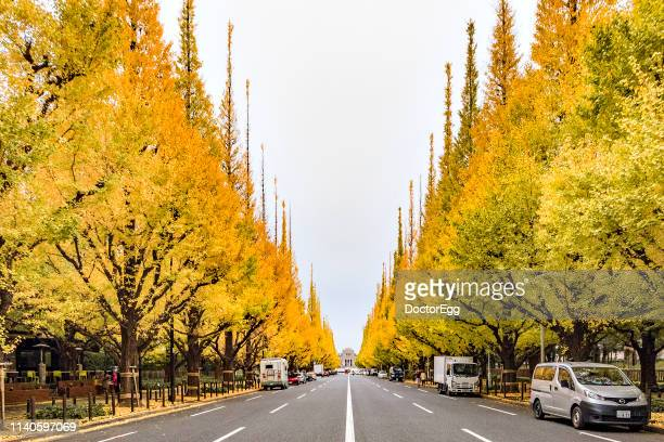 Row of Yellow Gingko Trees along street full blooming in Autumn at Icho Namiki Avenue near Aoyama Itchome Station, Tokyo, Japan