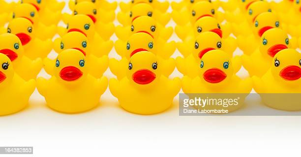 row of yellow rubber duckies. - repetition stock pictures, royalty-free photos & images